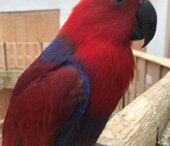 Papugarnia Carmen zaprasza przez cały tydzień