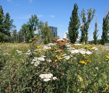 Dzikie miasto. Spacer botaniczno-urbanistyczny