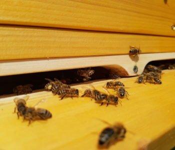 Warsztaty o pszczołach, kwiatach i drzewach w Tajemniczym Ogrodzie