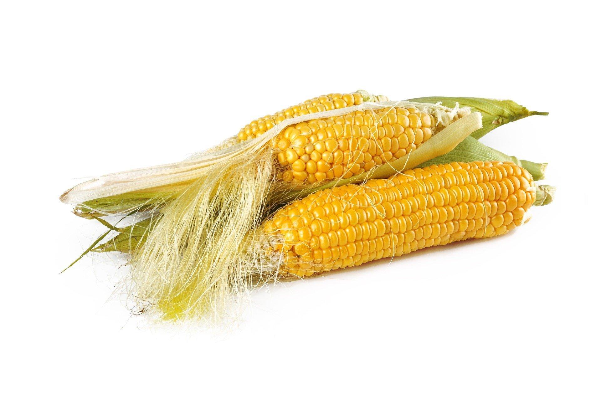 zagadki o warzywach z odpowiedziami, zgadywanki dla dzieci