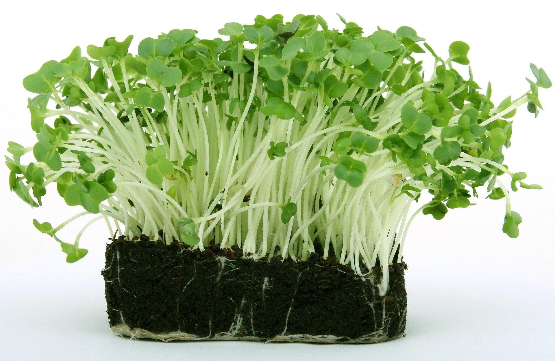 Zagadki o warzywach dla przedszkolaków