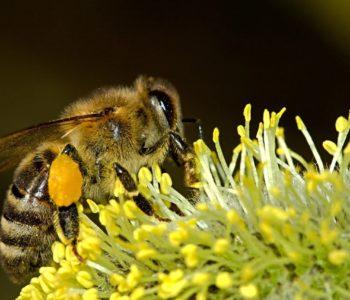 Dzień Pszczół w Miejskim Ogrodzie Botanicznym w Zabrzu