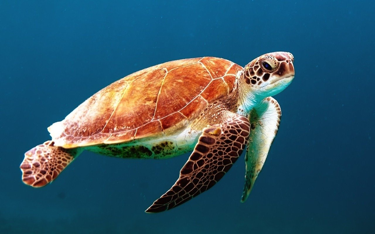 Quiz dla dzieci morza i oceany