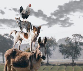 quiz z hiszpańskiego zwierzęta animales numeros test wiedzy łatwy