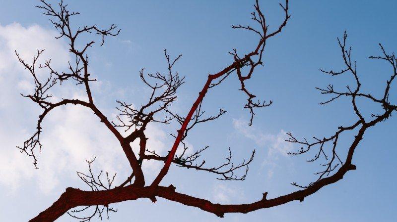 Co drzewo pamięta. Warsztaty o pamięci drzew dla dzieci w wieku 6-10 lat