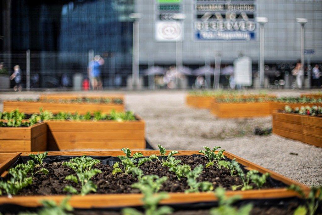 Plono-branie w Katowickiej - degustacje, ekosaszetki z warzywami oraz nasiona łąk kwietnych