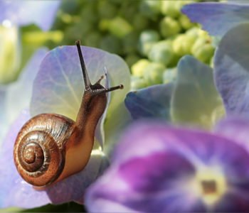 Wiersz o ślimaku, wierszyki o zwierzętach