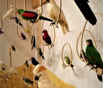 Muzealne rozwijanie skrzydeł - Papugi świata. Warsztaty przyrodnicze