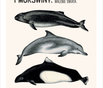 Wystawa modeli delfinów
