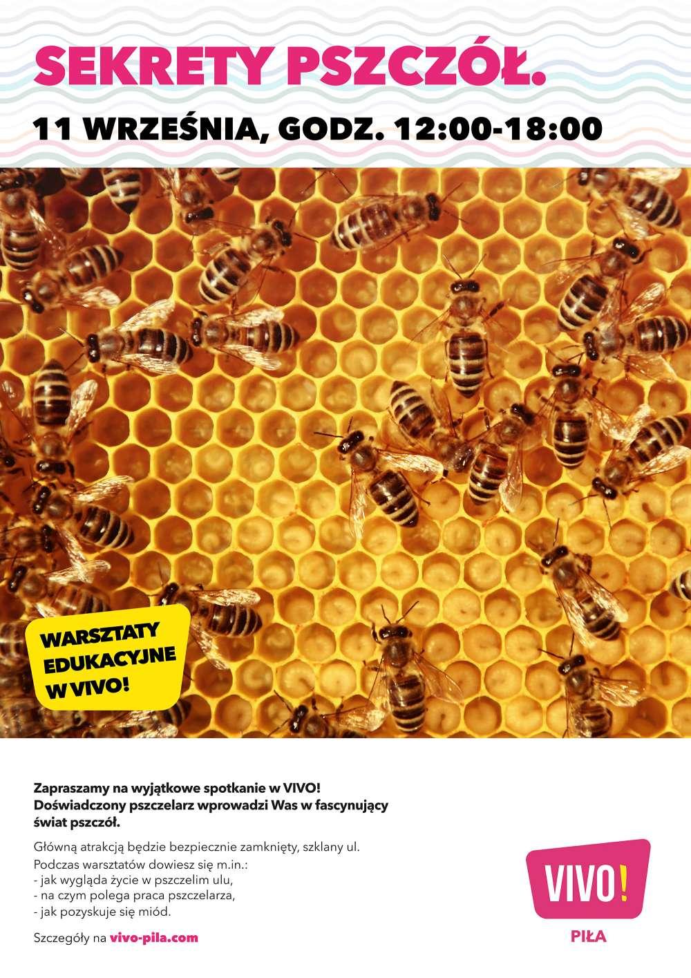 Sekrety Pszczół, czyli spotkanie z Pszczelarium w VIVO! Piła
