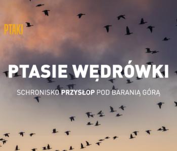 Ptasie wędrówki – spacery, warsztaty i noclegowisko