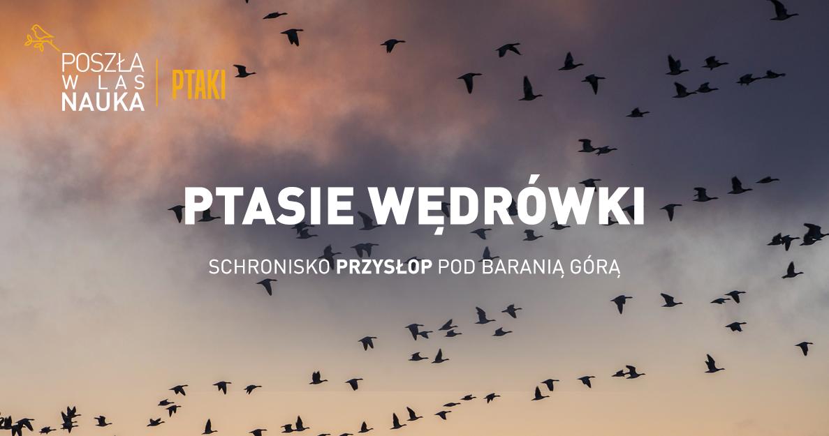 Ptasie wędrówki - spacery, warsztaty i noclegowisko
