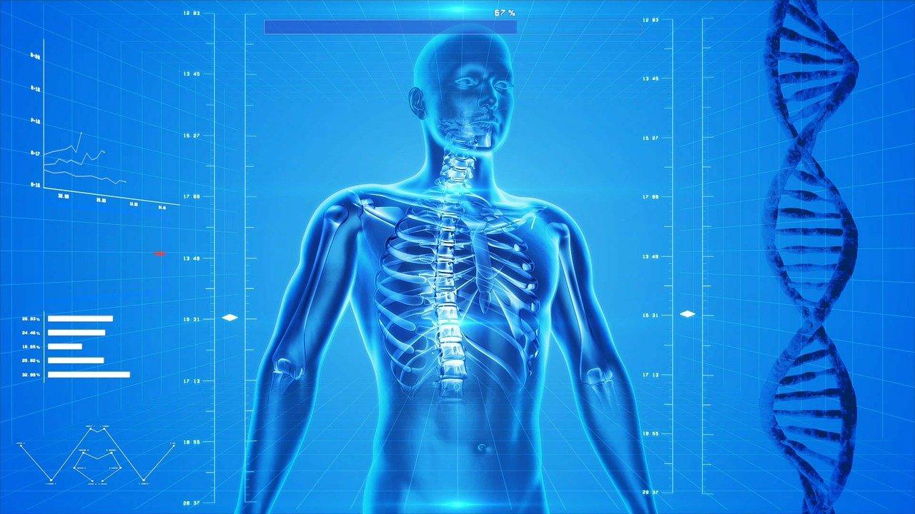 Ciało człowieka: quiz wiedzy