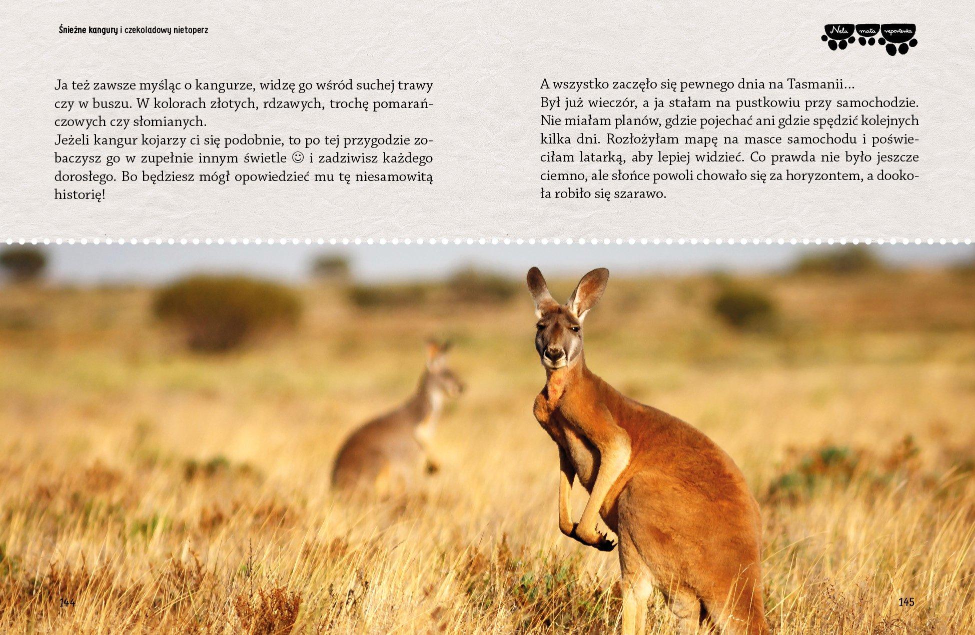 kangur str-142-169