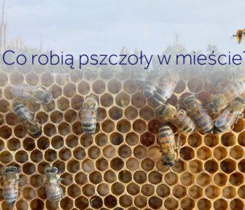 Co robią pszczoły na dachu Urzędu Miasta Gdyni? Spotkanie