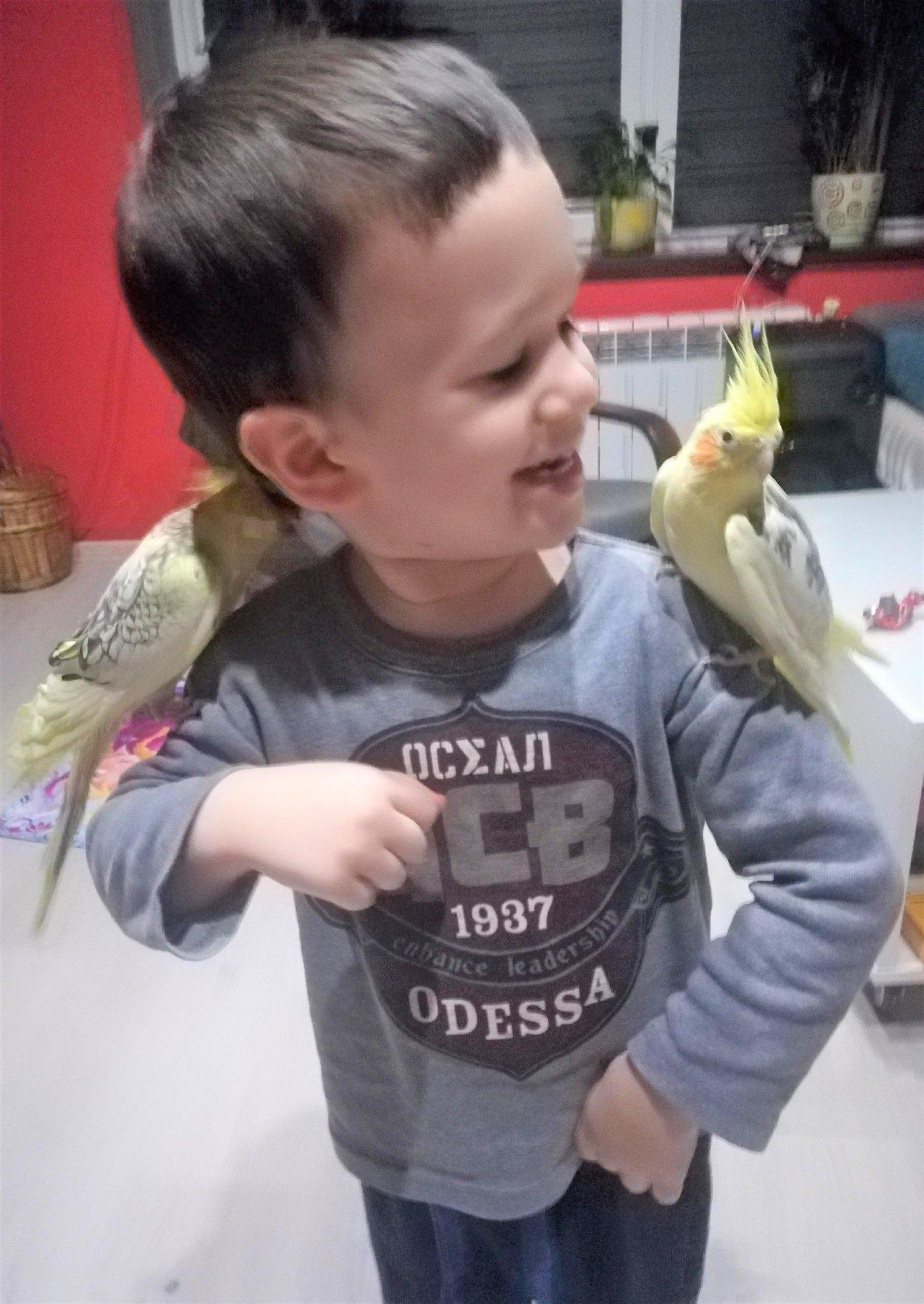 Zaklinacz papug