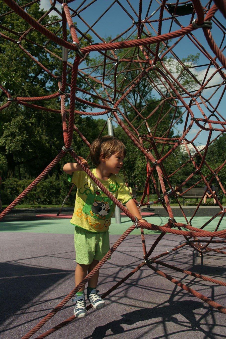 W pajęczej sieci