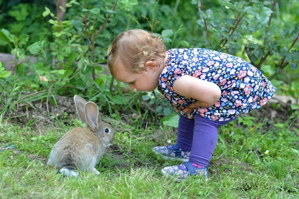 Siema królik, podamy, pokicamy?