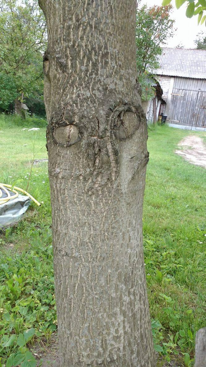 Sowie drzewko